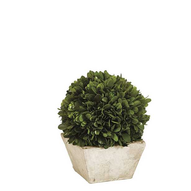 Preserved Boxwood Topiary- small - Ballard Designs
