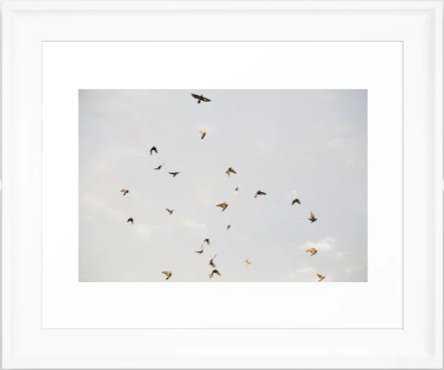 Birds In The Sky Framed Art Print - Society6