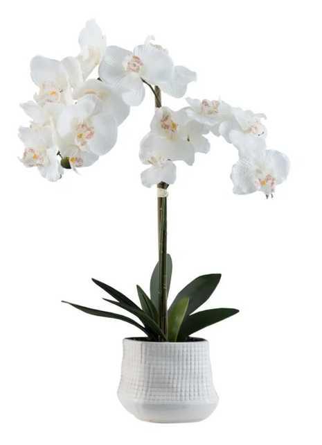 Orchid Floral Centerpiece in Pot - Wayfair