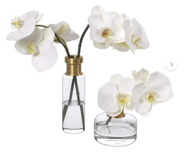 Diane James Home Phalaenopsis Orchids In Glass Bud Vases / Set Of 2 - Perigold