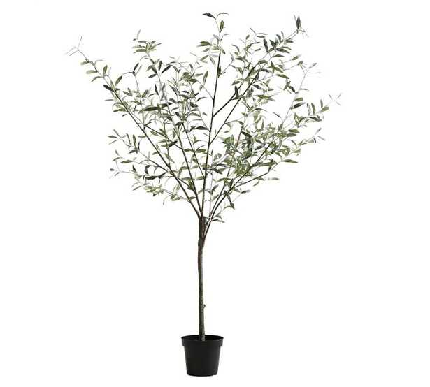 """Faux Potted Olive Tree, Large - 71"""" - Pottery Barn"""