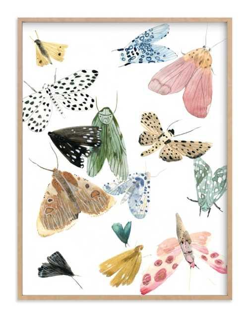 Moths - Minted
