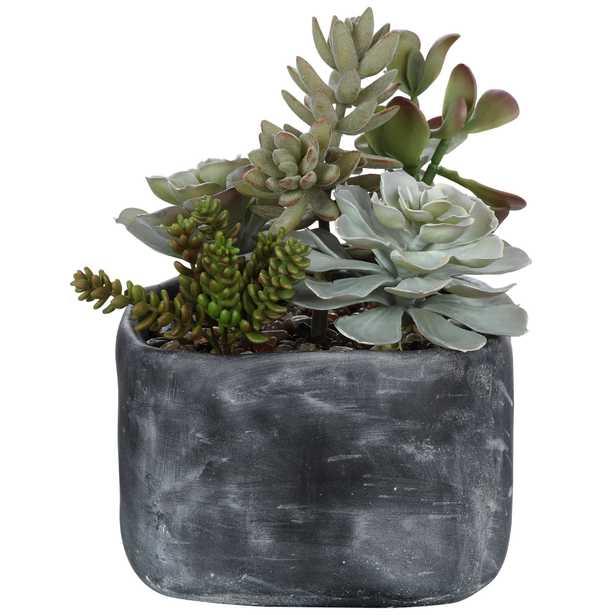 Alverio Succulents - Hudsonhill Foundry