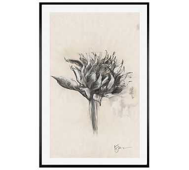 """Charcoal Sunflower Sketch, Single Bloom, 28"""" X 42"""" Wood Gallery, White, No Mat - Pottery Barn"""