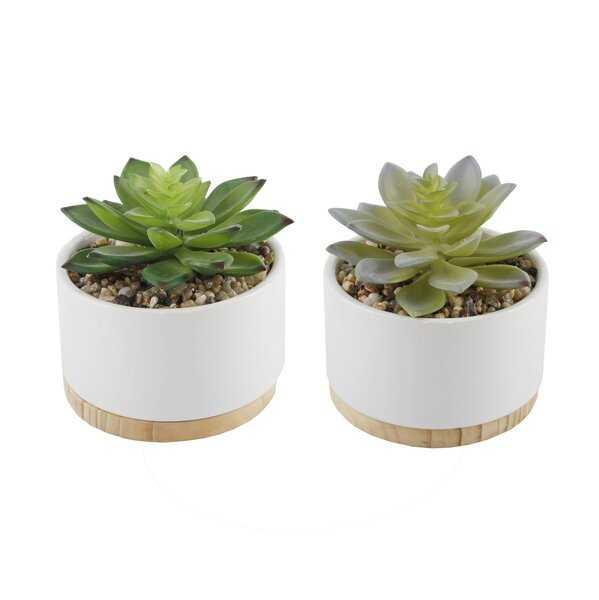 2 Piece Succulent Plant in Pot - Wayfair