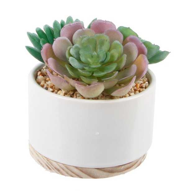 Mix Desktop Succulent Plant in Planter - Wayfair