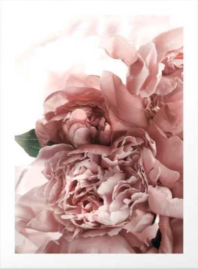 Blush Pink Floral Art Print - Medium by Printsproject - Society6