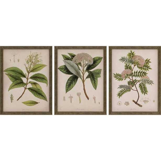 'Plants II' 3 Piece Picture Frame Graphic Art Set - Birch Lane