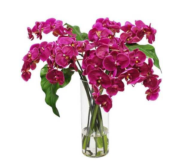 Faux Phalaenopsis Orchid in Slim Cylinder Vase - Fuchsia - Pottery Barn