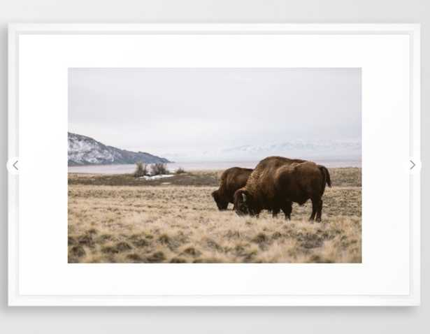 """Bison sharing the feed Framed Art Print - 26"""" x 38"""" - Vector White - Society6"""