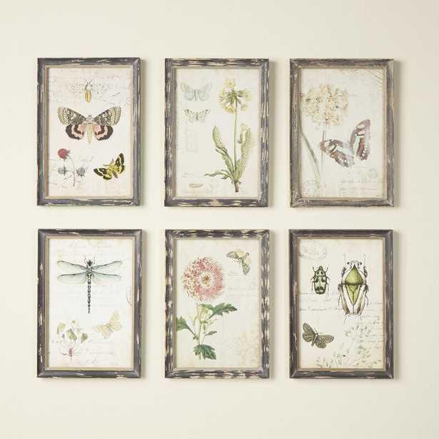 'Gardener' 6 Piece Framed Graphic Art Set - Birch Lane