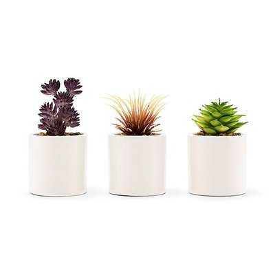 Small Faux Desktop Succulent Plant in Pot (set of 6) - Wayfair
