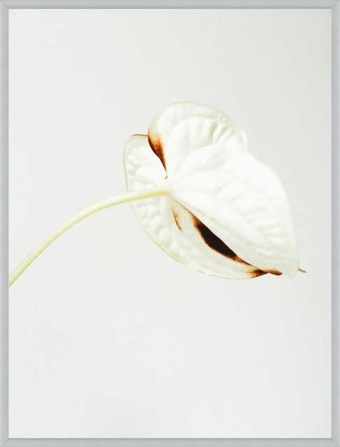 Anthurium  BY JANNEKE LUURSEMA, 11x14, Silver Frosted Metal Frame/ No Matte - Artfully Walls