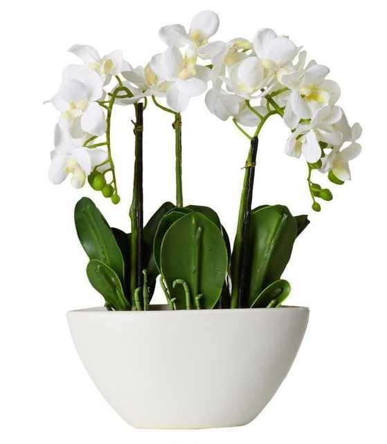 Orchid Centerpiece in Pot - Wayfair