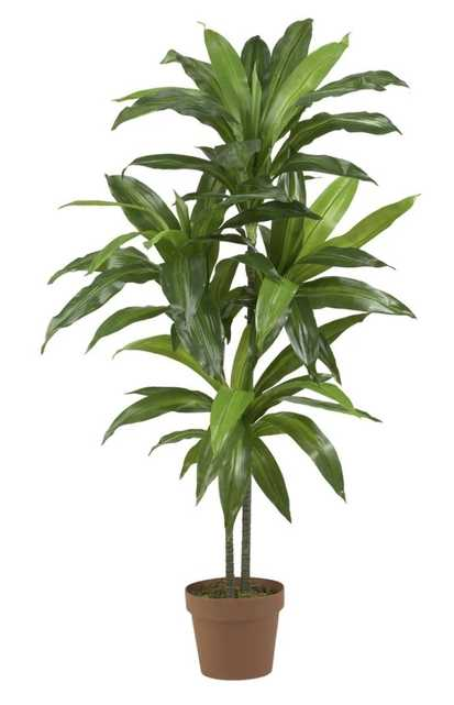 """48"""" Dracaena Silk Plant (Real Touch) - Fiddle + Bloom"""