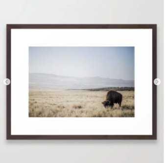 Bison Grazing Framed Art Print - Society6