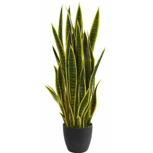 Sansevieria Floor Foliage Plant in Vase - Wayfair