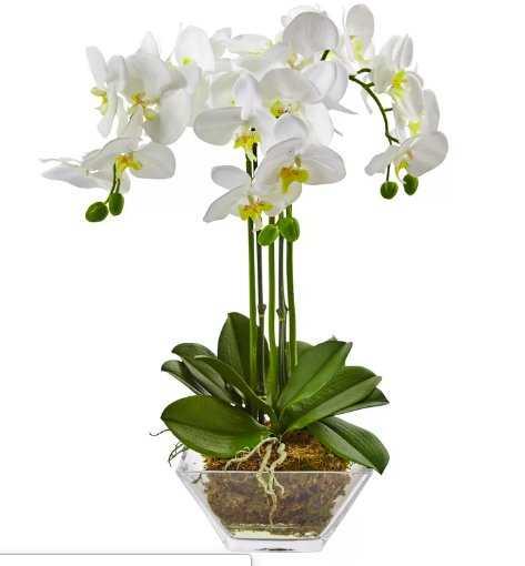 Triple Phalaenopsis Orchid Floral Arrangements in Decorative Vase - Wayfair