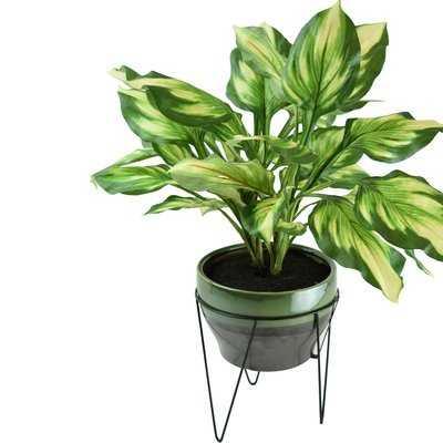Floor Hosta Plant in Pot - AllModern