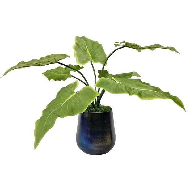 Mari Calla Accent Plant - Hudsonhill Foundry