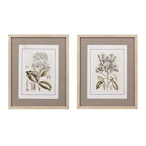 Tinted Botanical 2 Piece Graphic Art Print Set - Wayfair