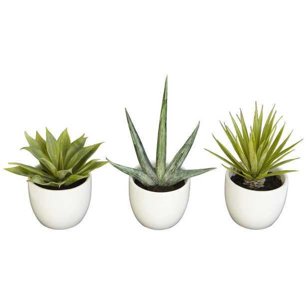 Faux Potted Succulent Collection, Set of 3 - Haldin