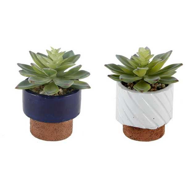 Navy Desktop Succulent Plant in Pot - Wayfair