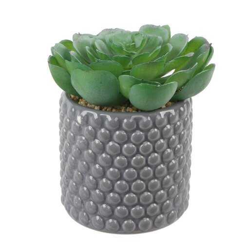 Succulent Plant in Pot - Wayfair