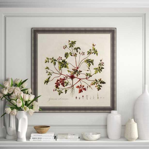 Soicher Marin Finn & Ivy 'Geranium Robertianum' Framed Photographic Print - Perigold