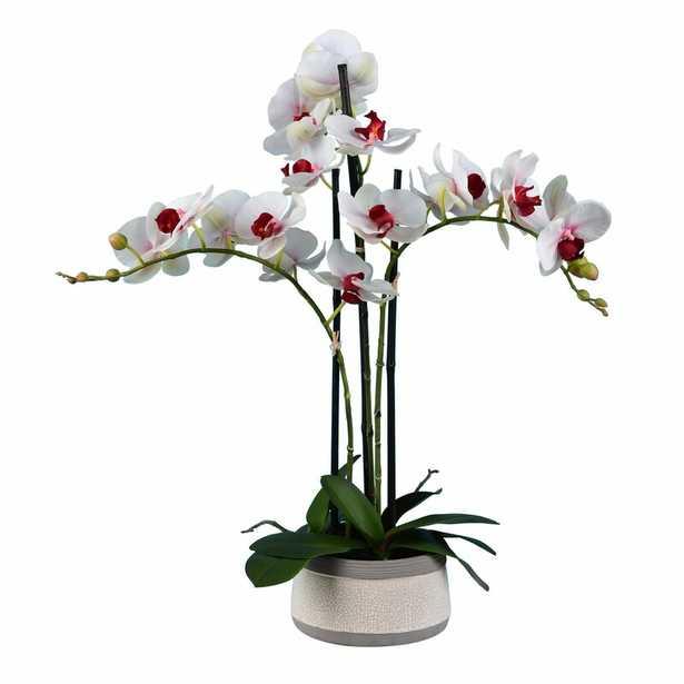 Orchids Floral Arrangements and Centerpieces in Pot - Wayfair