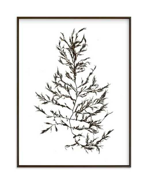 kelp print 004 Art Print - Minted