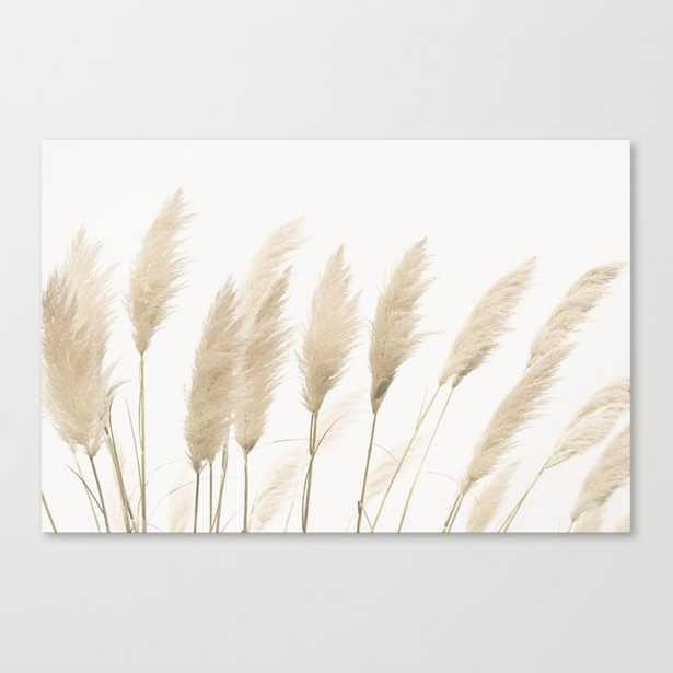 Pampas grass Canvas Print - Society6
