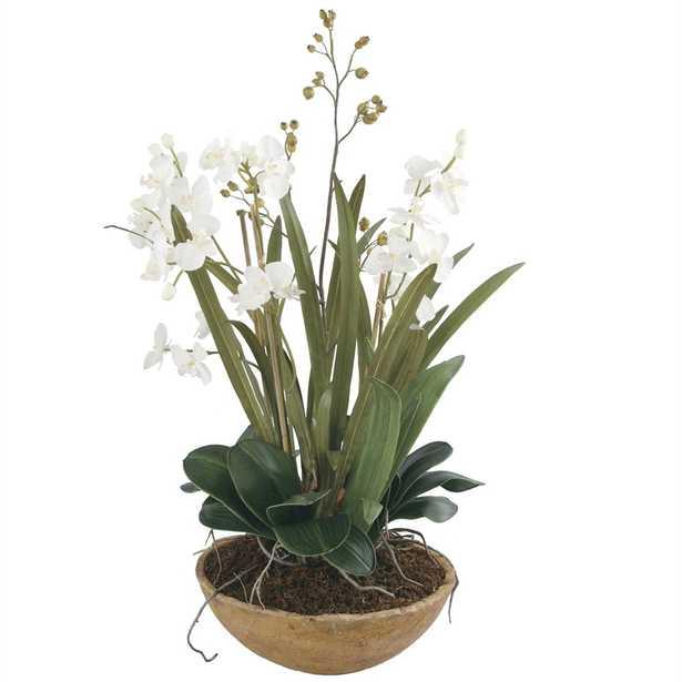 Moth Orchid Planter - Hudsonhill Foundry