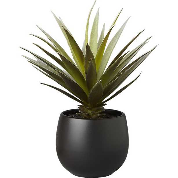 Potted succulent with black pot - CB2