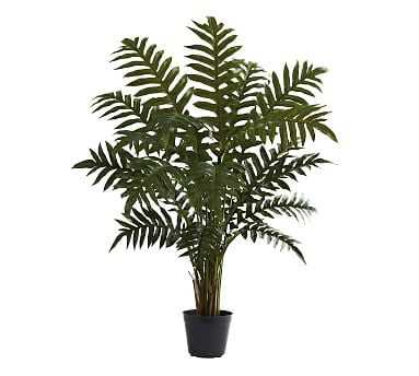 Faux Potted Evergreen Plant - Pottery Barn