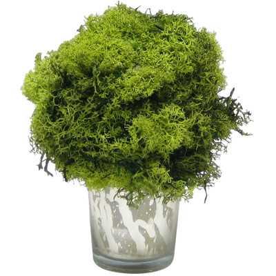 Preserved Reindeer Moss Topiary - Wayfair