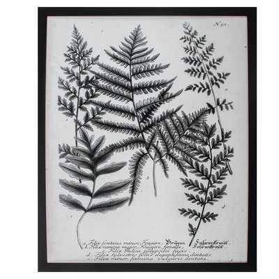 'Charcoal Fern Gather II' Framed Graphic Art - Birch Lane