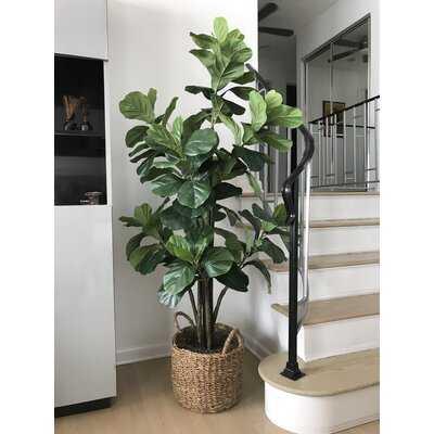 Fiddle Leaf Fig Tree With Basket - Wayfair