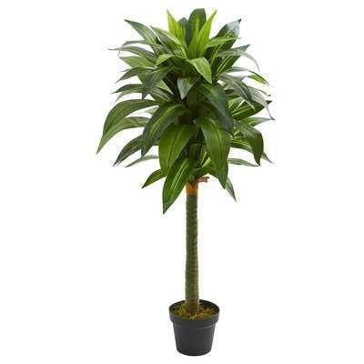 Dracaena Floor Foliage Plant in Vase - Wayfair