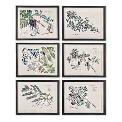 'Berry Branch Botanical Study' 6 Piece Framed Print Set on Paper - Wayfair