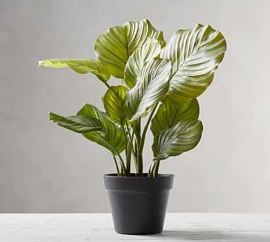 Faux Potted Greater Burdock Houseplant - Pottery Barn