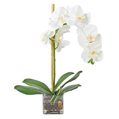 Faux Phalaenopsis Orchid Floral Arrangement in Acrylic Glass Vase - AllModern