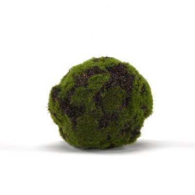 Crackled Moss Ball Plant - Wayfair
