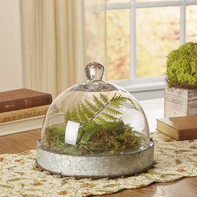 Oliphant Glass Cloche/Water Globe - Wayfair