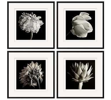 """Flower Black & White Framed Print, Set of 4, 24 x 24"""" - Pottery Barn"""