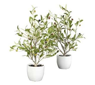 Faux Olive Tree In Vase, Set of 2 - Pottery Barn