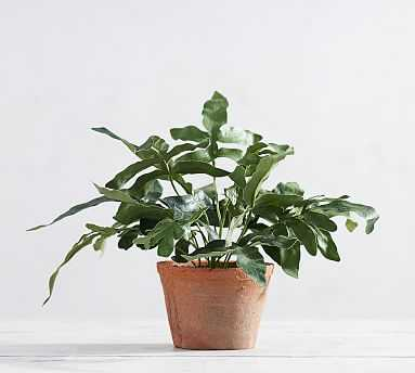 Faux Potted Kangaroo Paw Fern - Pottery Barn