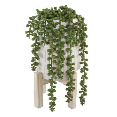 Donkey Tail String of Pearls Succulent Plant in Pot - AllModern