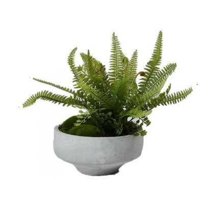 Mixed Ferns Desktop Succulent Plant in Bowl - Wayfair
