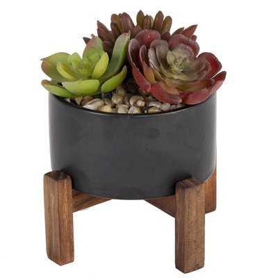 Succulent Plant in Pot - AllModern
